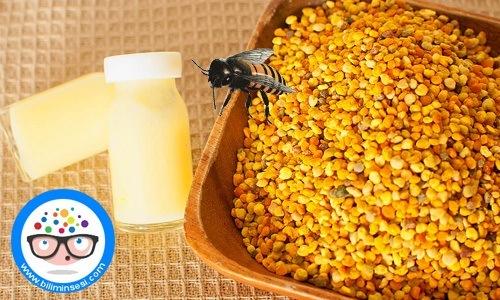 arı sutu01