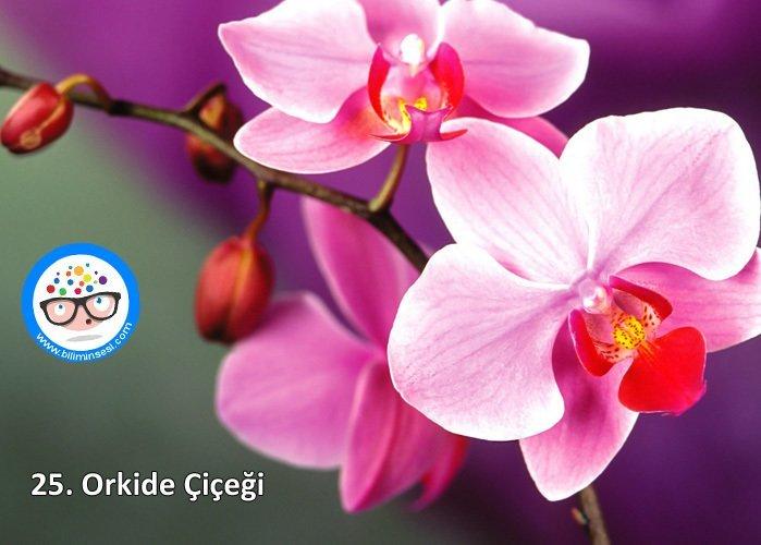 orkide-çiçek anlamları