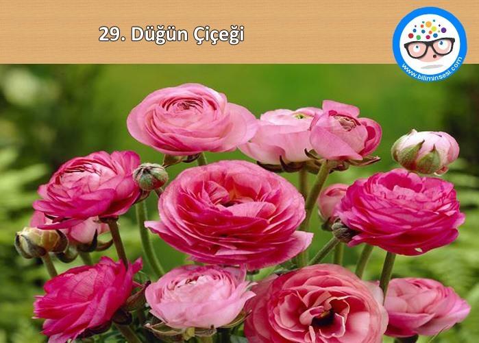 düğün çiçeği-çiçek anlamları