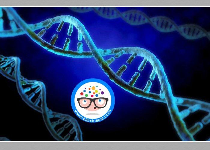 DNA'nin Elektronik Olarak İncelenmesi