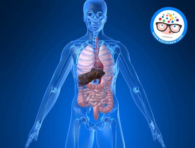 organ-naklinde-kuresel-isbirligi-icin-proje-baslatildi-