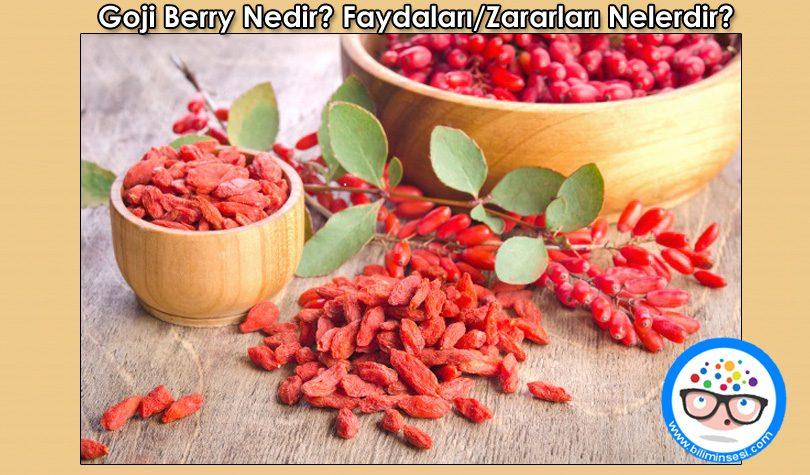 goji berry hakkında
