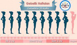 20 haftalik-gebelikte-neler-oluyor